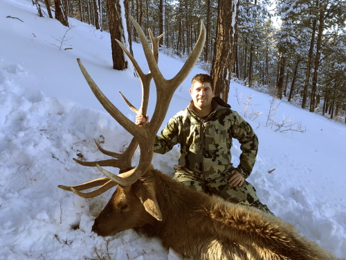 late season rifle bull elk hunting in arizona guides outfitters