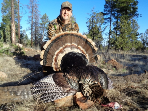 guided merriam's turkey hunting in new mexico