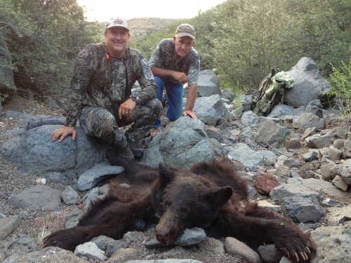 brown arizona bear hunting