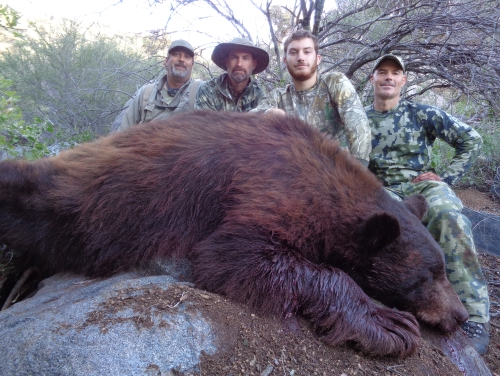 arizona bear hunt guides hunting outfitters
