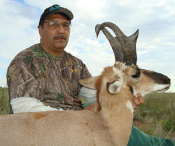 arizona pronghorn antelope