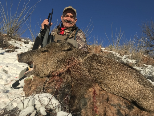 arizona javelina hunts hunting outfitters guides photos