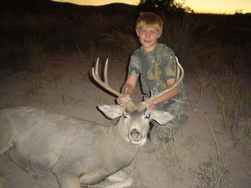 arizona desert mule deer