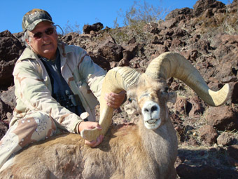 Arizona Nelson Desert bighorn sheep